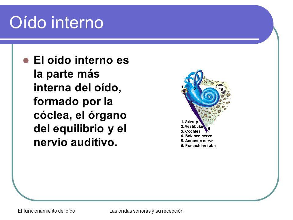 El funcionamiento del oídoLas ondas sonoras y su recepción Oído interno El oído interno es la parte más interna del oído, formado por la cóclea, el ór