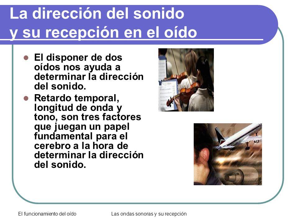 El funcionamiento del oídoLas ondas sonoras y su recepción La dirección del sonido y su recepción en el oído El disponer de dos oídos nos ayuda a dete