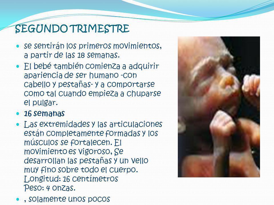 SEGUNDO TRIMESTRE se sentirán los primeros movimientos, a partir de las 18 semanas. El bebé también comienza a adquirir apariencia de ser humano -con