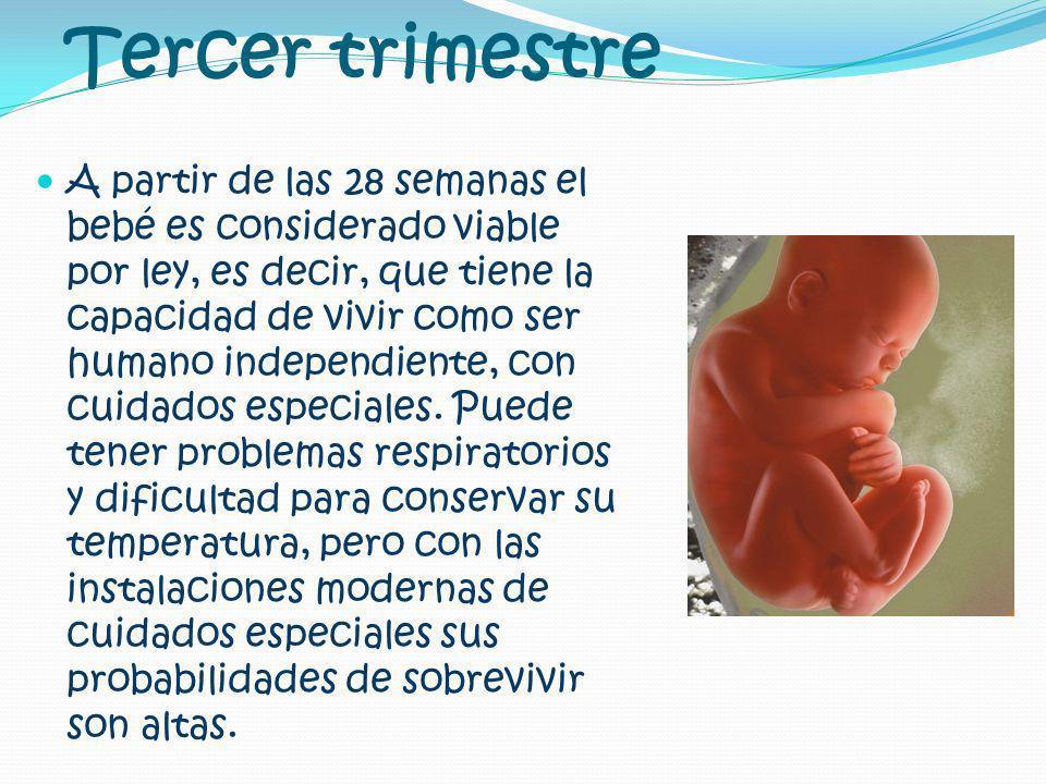 Tercer trimestre A partir de las 28 semanas el bebé es considerado viable por ley, es decir, que tiene la capacidad de vivir como ser humano independi