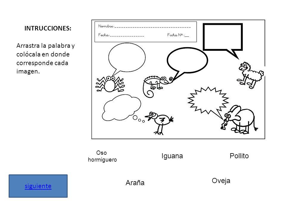 INTRUCCIONES: Arrastra la palabra y colócala en donde corresponde cada imagen. siguiente Oso hormiguero IguanaPollito Araña Oveja