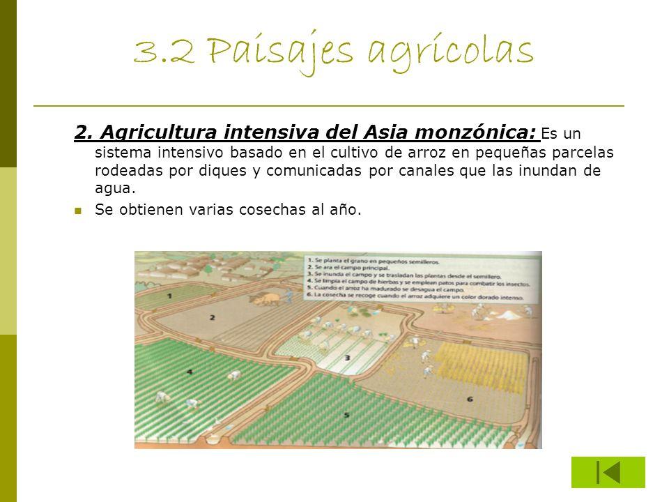 3.2 Paisajes agrícolas 2. Agricultura intensiva del Asia monzónica: Es un sistema intensivo basado en el cultivo de arroz en pequeñas parcelas rodeada