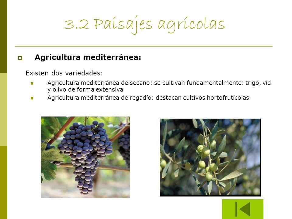 3.2 Paisajes agrícolas Agricultura mediterránea: Existen dos variedades: Agricultura mediterránea de secano: se cultivan fundamentalmente: trigo, vid