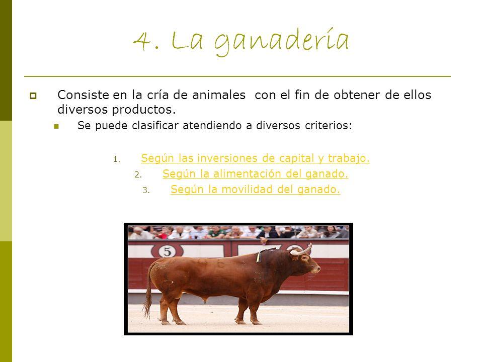 4. La ganadería Consiste en la cría de animales con el fin de obtener de ellos diversos productos. Se puede clasificar atendiendo a diversos criterios