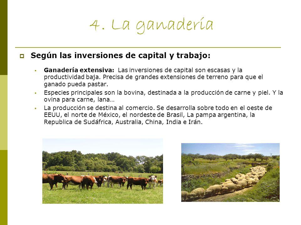 4. La ganadería Según las inversiones de capital y trabajo: Ganadería extensiva: Las inversiones de capital son escasas y la productividad baja. Preci