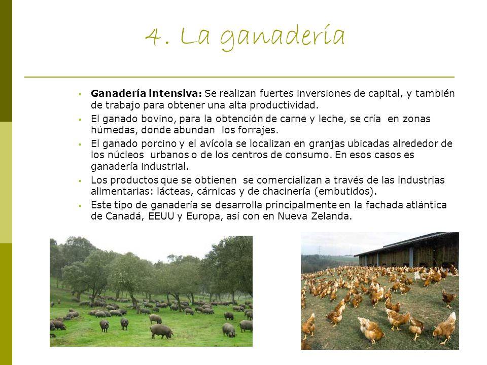 4. La ganadería Ganadería intensiva: Se realizan fuertes inversiones de capital, y también de trabajo para obtener una alta productividad. El ganado b