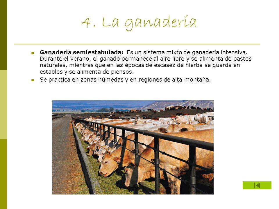 4. La ganadería Ganadería semiestabulada: Es un sistema mixto de ganadería intensiva. Durante el verano, el ganado permanece al aire libre y se alimen