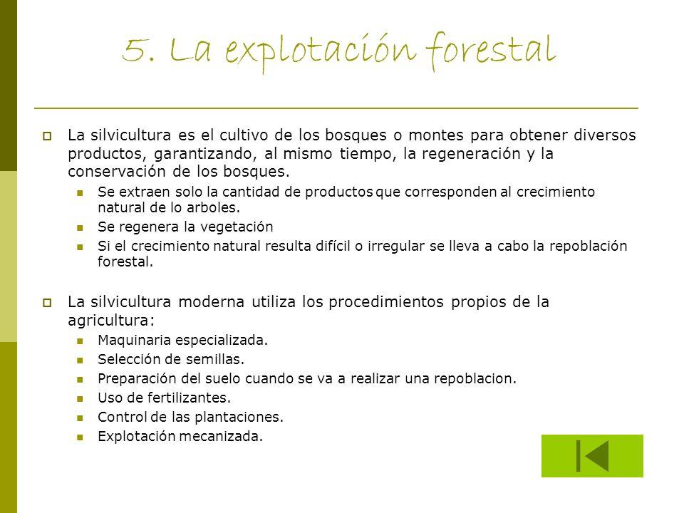 5. La explotación forestal La silvicultura es el cultivo de los bosques o montes para obtener diversos productos, garantizando, al mismo tiempo, la re