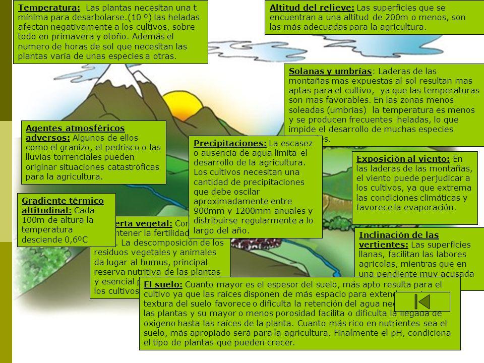 Solanas y umbrías: Laderas de las montañas mas expuestas al sol resultan mas aptas para el cultivo, ya que las temperaturas son mas favorables. En las