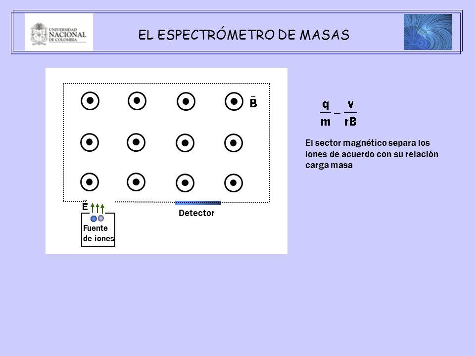 EL ESPECTRÓMETRO DE MASAS Fuente de iones El sector magnético separa los iones de acuerdo con su relación carga masa Detector