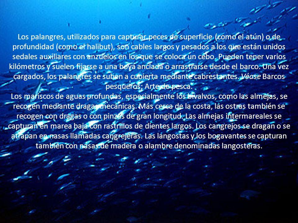 Los palangres, utilizados para capturar peces de superficie (como el atún) o de profundidad (como el halibut), son cables largos y pesados a los que e