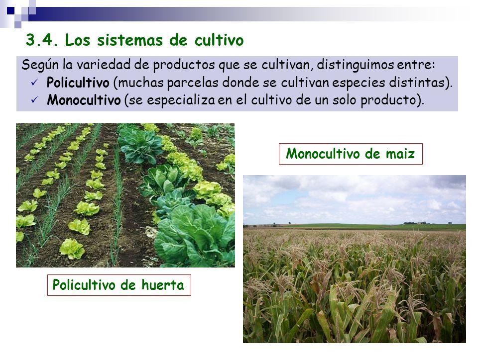 Según la variedad de productos que se cultivan, distinguimos entre: Policultivo (muchas parcelas donde se cultivan especies distintas). Monocultivo (s