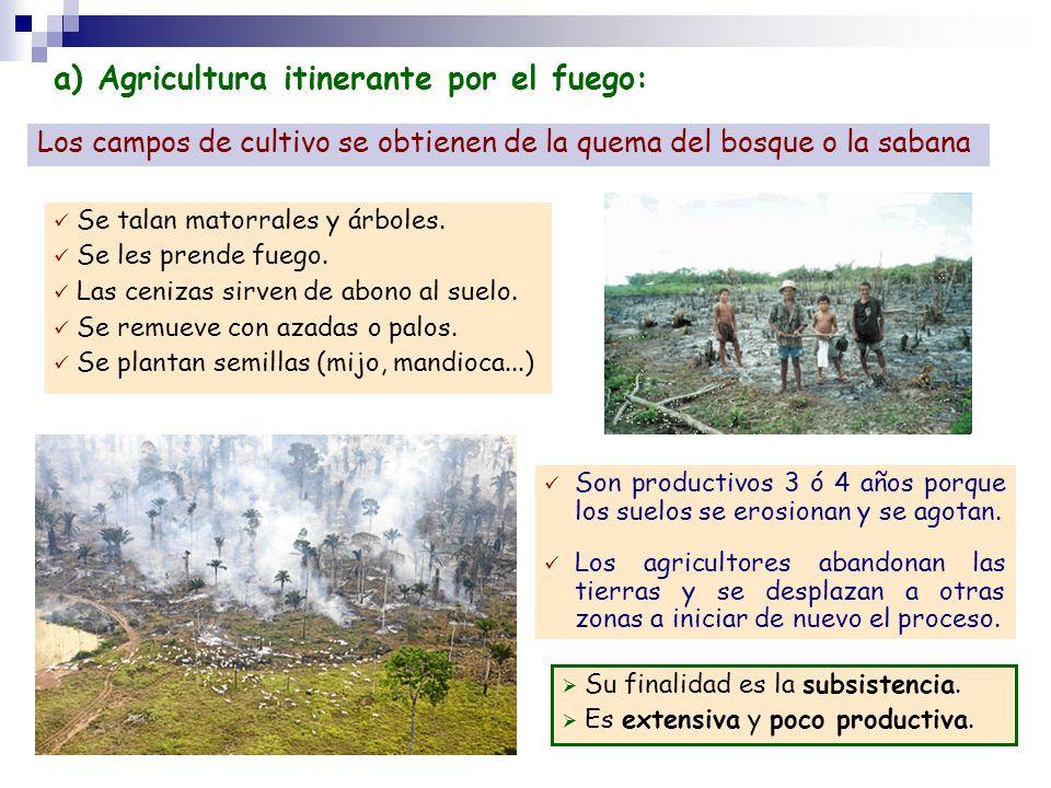 a) Agricultura itinerante por el fuego: Los campos de cultivo se obtienen de la quema del bosque o la sabana Se talan matorrales y árboles. Se les pre