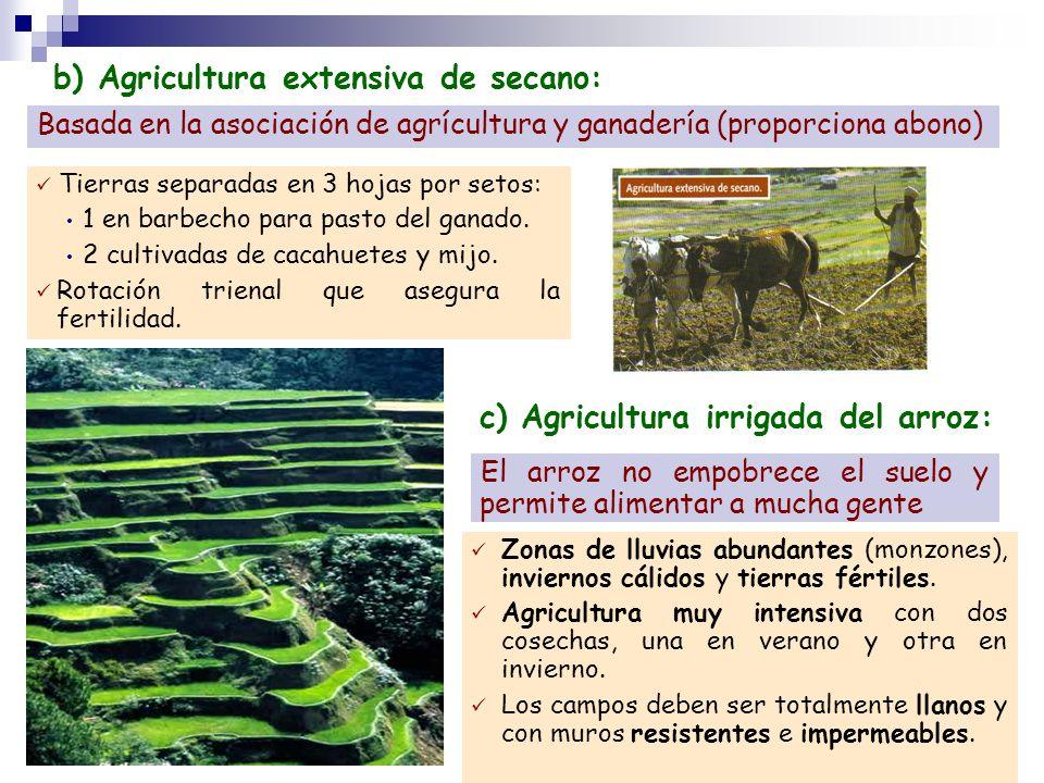 b) Agricultura extensiva de secano: Basada en la asociación de agrícultura y ganadería (proporciona abono) Tierras separadas en 3 hojas por setos: 1 e