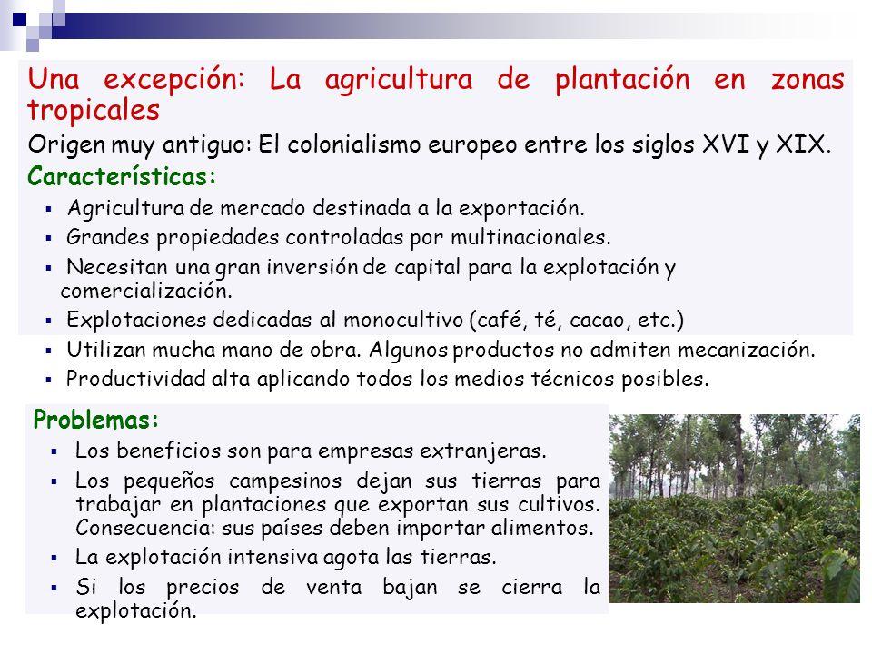 Una excepción: La agricultura de plantación en zonas tropicales Origen muy antiguo: El colonialismo europeo entre los siglos XVI y XIX. Característica