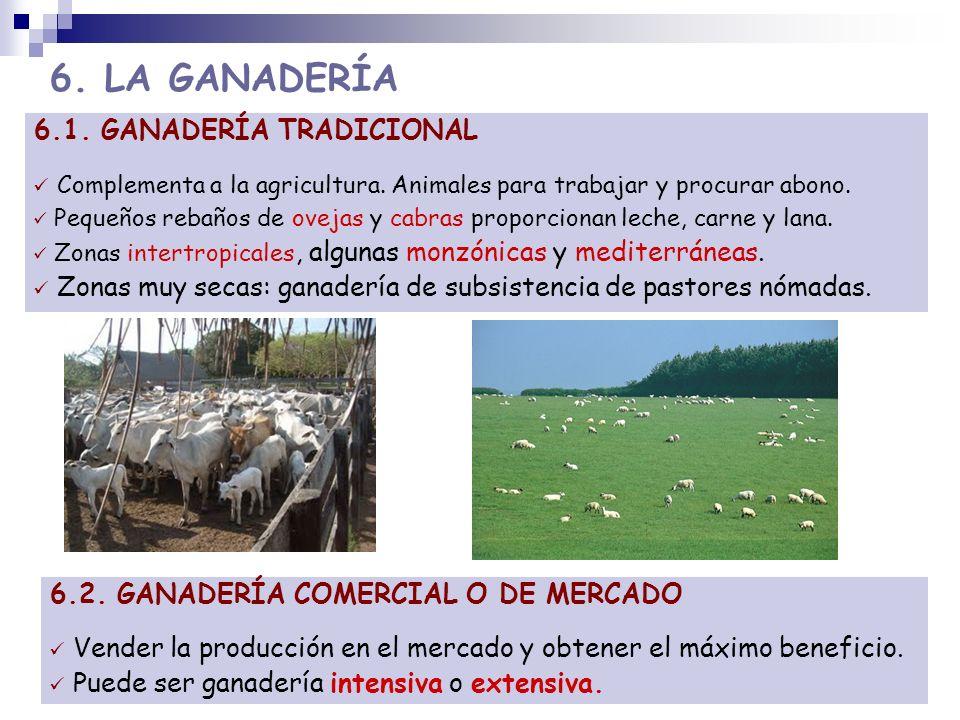6. LA GANADERÍA 6.1. GANADERÍA TRADICIONAL Complementa a la agricultura. Animales para trabajar y procurar abono. Pequeños rebaños de ovejas y cabras