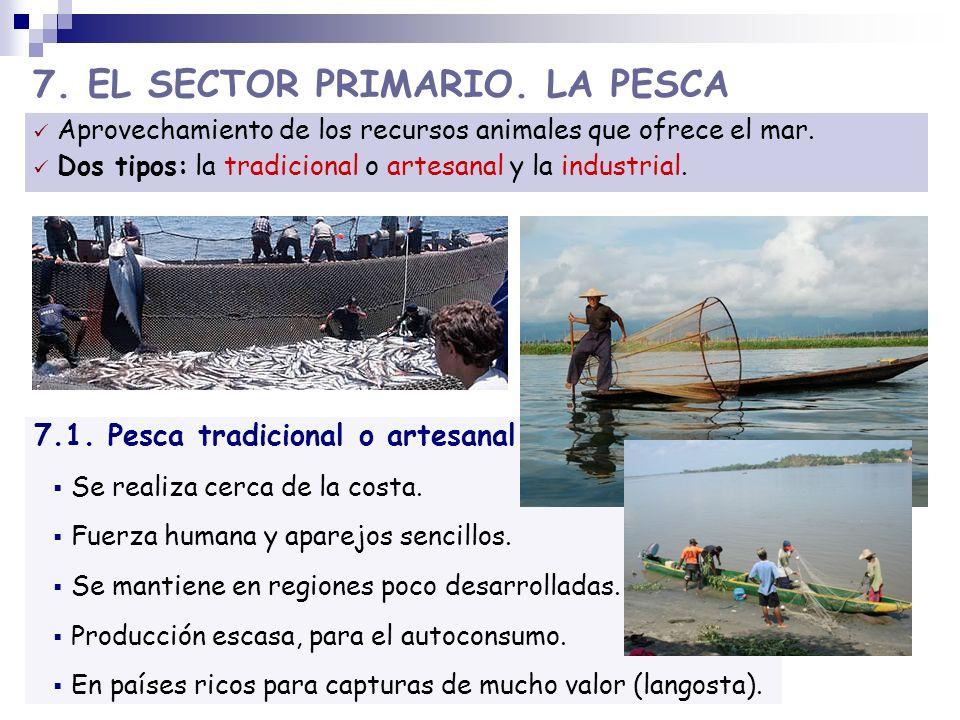 7. EL SECTOR PRIMARIO. LA PESCA Aprovechamiento de los recursos animales que ofrece el mar. Dos tipos: la tradicional o artesanal y la industrial. 7.1