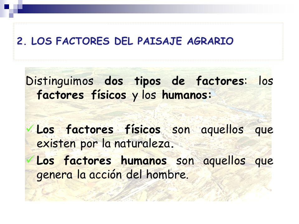 2. LOS FACTORES DEL PAISAJE AGRARIO Distinguimos dos tipos de factores: los factores físicos y los humanos: Los factores físicos son aquellos que exis