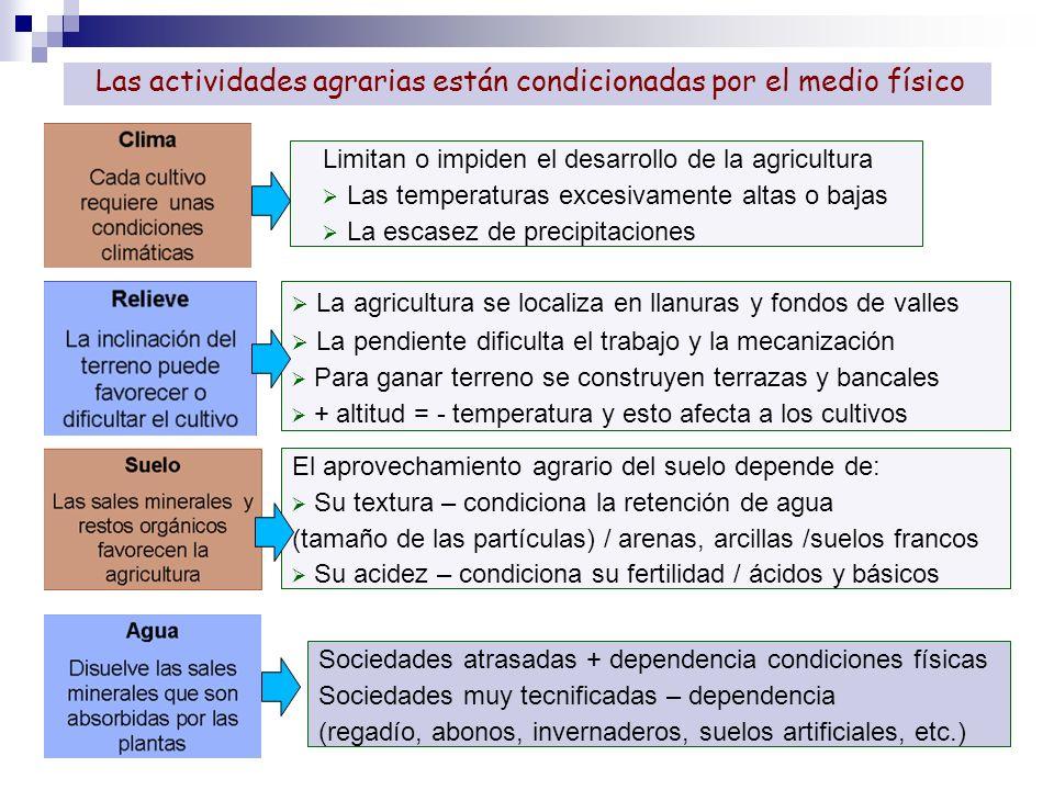La agricultura se localiza en llanuras y fondos de valles La pendiente dificulta el trabajo y la mecanización Para ganar terreno se construyen terraza