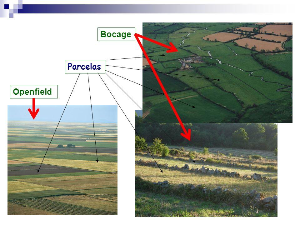 b) Agricultura extensiva de secano: Basada en la asociación de agrícultura y ganadería (proporciona abono) Tierras separadas en 3 hojas por setos: 1 en barbecho para pasto del ganado.