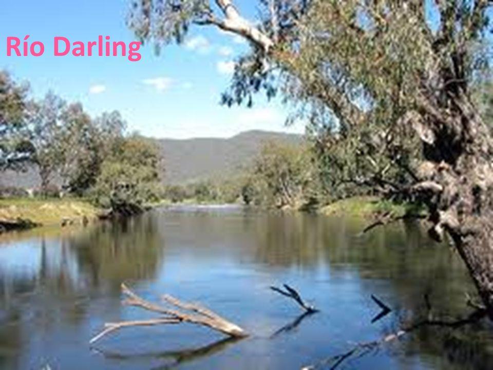 26/04/12 Río Darling