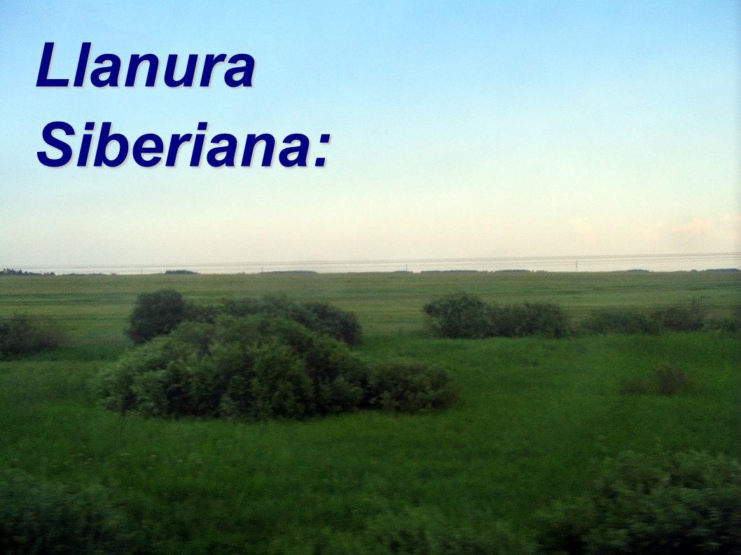 Llanura Siberiana: