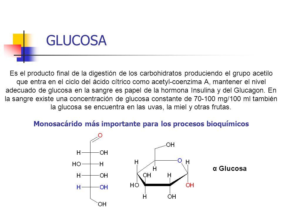 Es el producto final de la digestión de los carbohidratos produciendo el grupo acetilo que entra en el ciclo del ácido cítrico como acetyl-coenzima A,