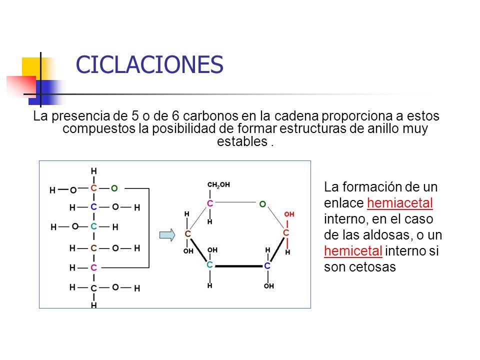 CICLACIONES La presencia de 5 o de 6 carbonos en la cadena proporciona a estos compuestos la posibilidad de formar estructuras de anillo muy estables.