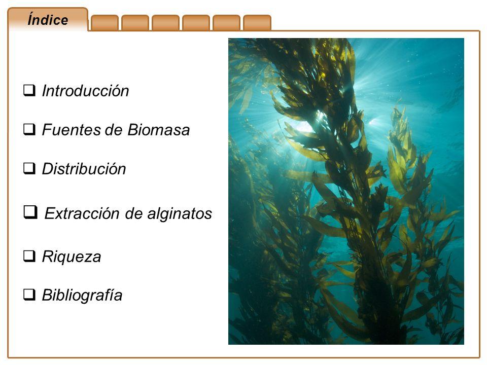 Índice Introducción Fuentes de Biomasa Distribución Extracción de alginatos Riqueza Bibliografía