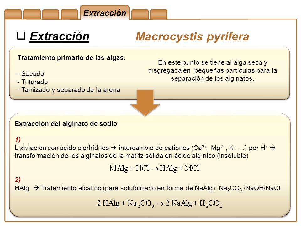Extracción Macrocystis pyrifera En este punto se tiene al alga seca y disgregada en pequeñas partículas para la separación de los alginatos. Extracció
