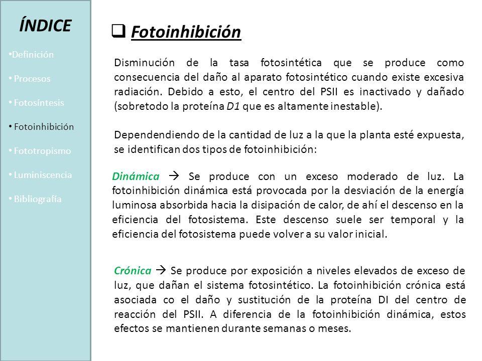 Fotoinhibición Disminución de la tasa fotosintética que se produce como consecuencia del daño al aparato fotosintético cuando existe excesiva radiación.