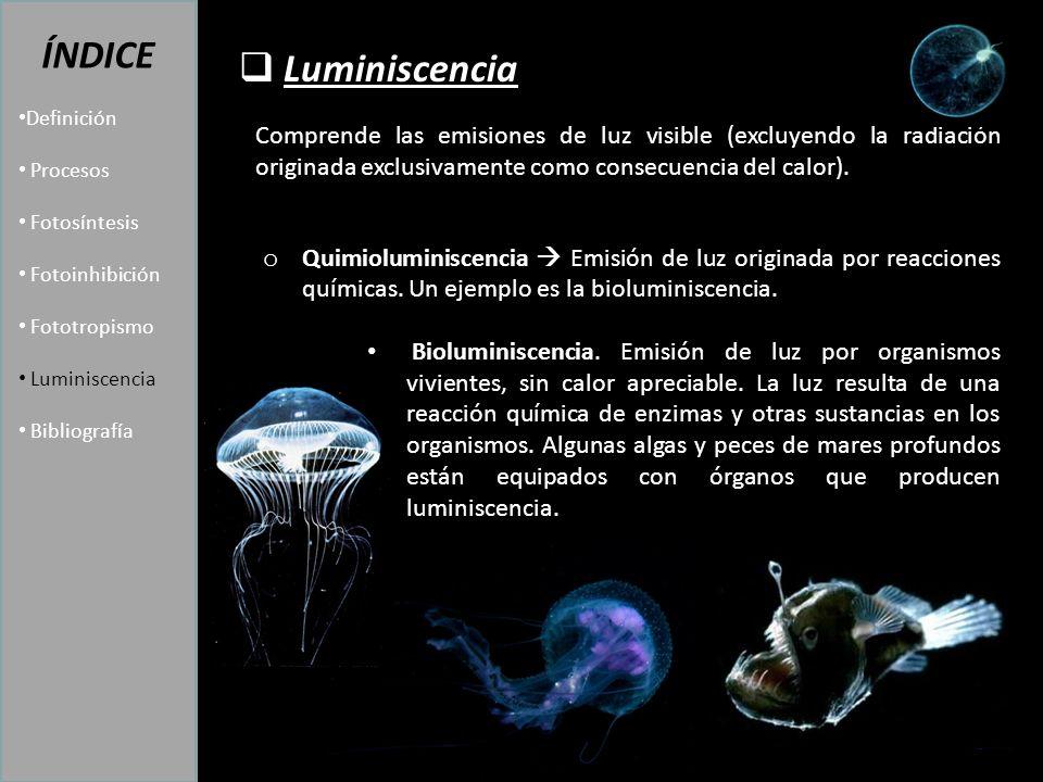 Luminiscencia ÍNDICE Definición Procesos Fotosíntesis Fotoinhibición Fototropismo Luminiscencia Bibliografía Comprende las emisiones de luz visible (excluyendo la radiación originada exclusivamente como consecuencia del calor).