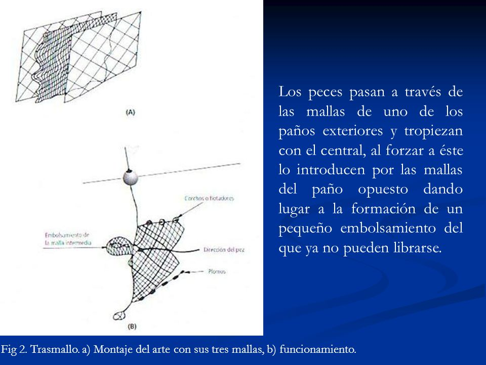Fig 2. Trasmallo. a) Montaje del arte con sus tres mallas, b) funcionamiento. Los peces pasan a través de las mallas de uno de los paños exteriores y