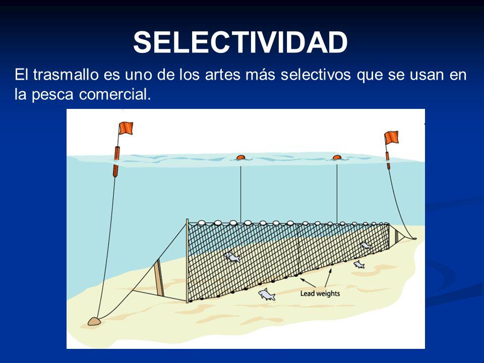 El trasmallo es uno de los artes más selectivos que se usan en la pesca comercial. SELECTIVIDAD