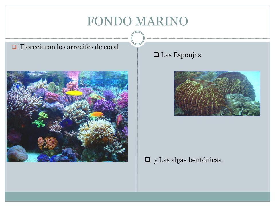 FONDO MARINO Florecieron los arrecifes de coral. y Las algas bentónicas. Las Esponjas