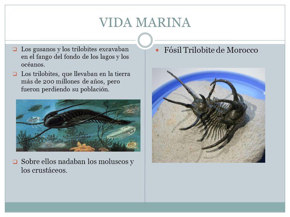 VIDA MARINA Los gusanos y los trilobites excavaban en el fango del fondo de los lagos y los océanos. Los trilobites, que llevaban en la tierra más de