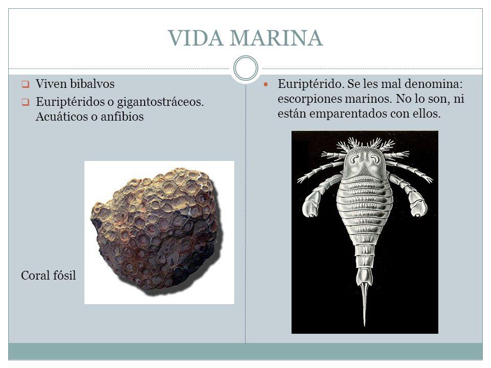 VIDA MARINA Viven bibalvos Euriptéridos o gigantostráceos. Acuáticos o anfibios Coral fósil Euriptérido. Se les mal denomina: escorpiones marinos. No