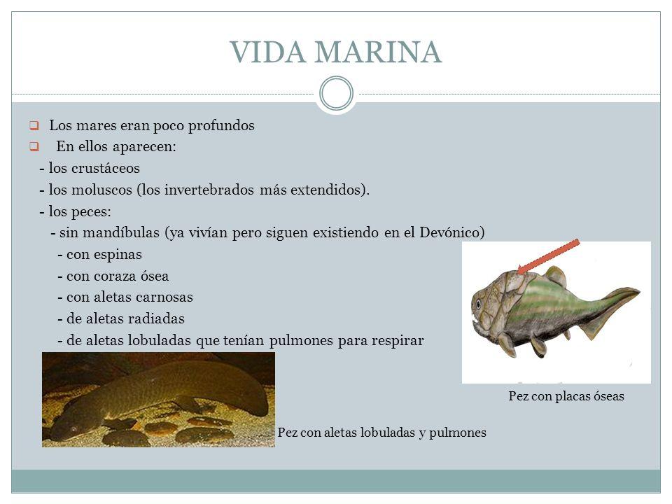 VIDA MARINA Los mares eran poco profundos En ellos aparecen: - los crustáceos - los moluscos (los invertebrados más extendidos). - los peces: - sin ma