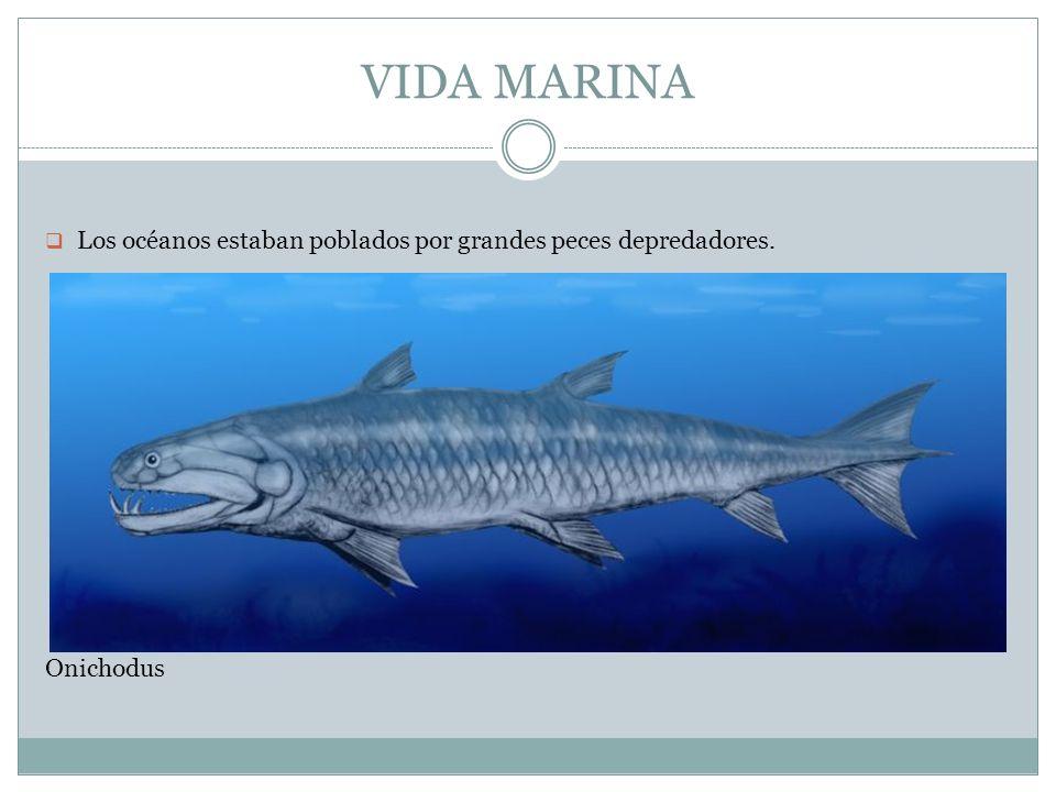 VIDA MARINA Los océanos estaban poblados por grandes peces depredadores. Onichodus