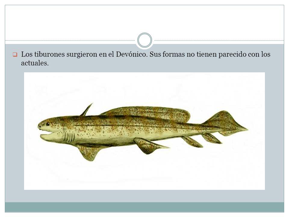 Los tiburones surgieron en el Devónico. Sus formas no tienen parecido con los actuales.