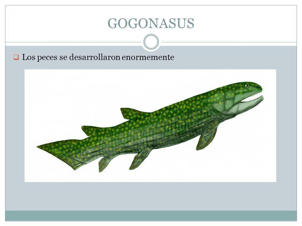 GOGONASUS Los peces se desarrollaron enormemente