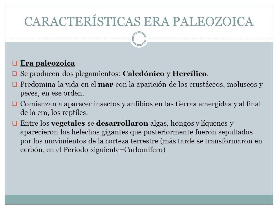 CARACTERÍSTICAS ERA PALEOZOICA Era paleozoica Se producen dos plegamientos: Caledónico y Hercílico. Predomina la vida en el mar con la aparición de lo