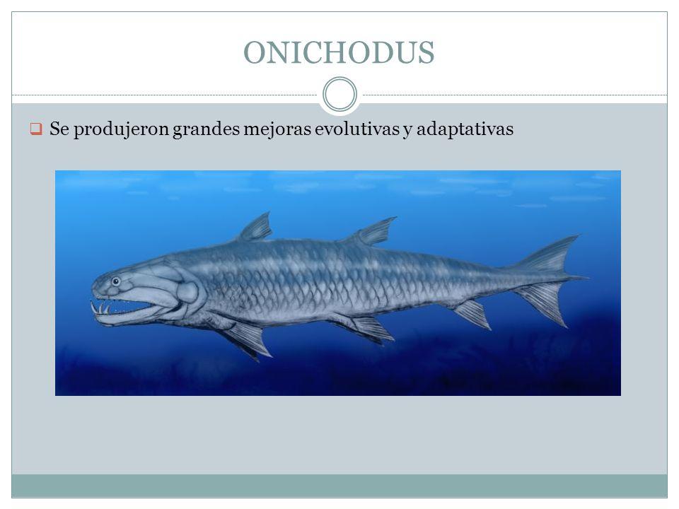 ONICHODUS Se produjeron grandes mejoras evolutivas y adaptativas