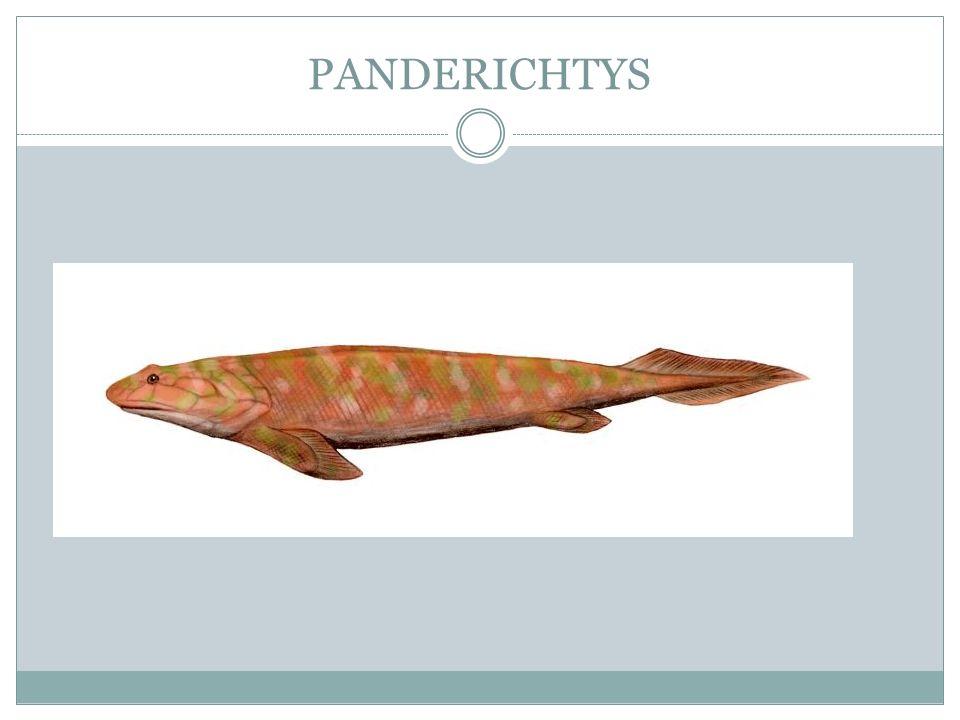PANDERICHTYS