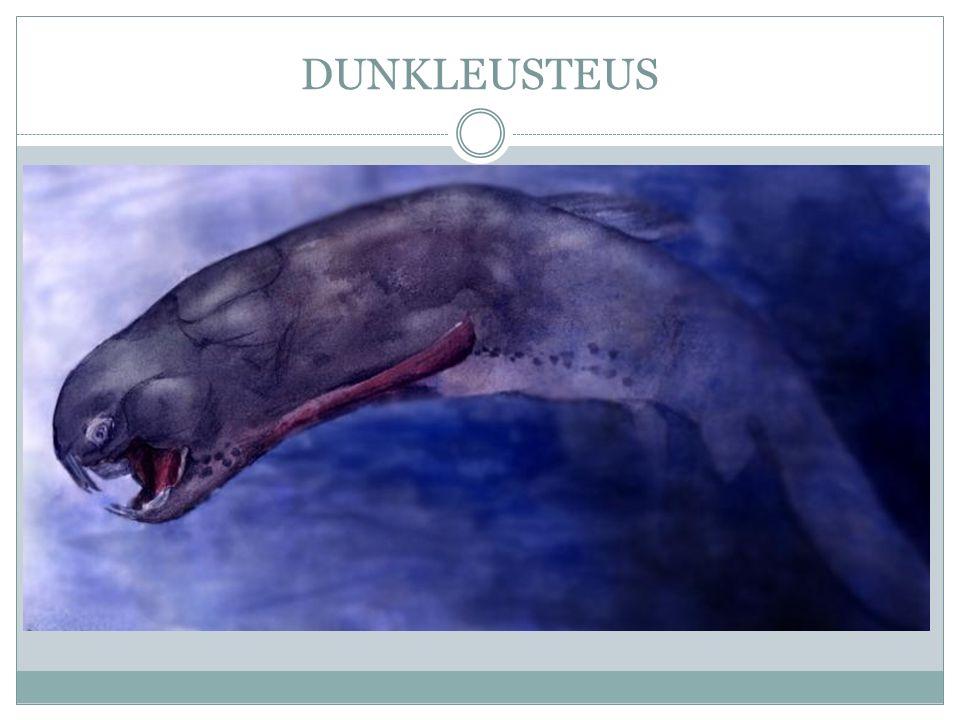 DUNKLEUSTEUS