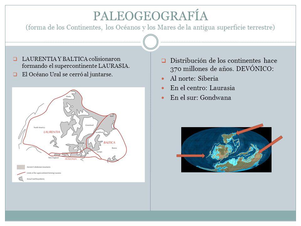 PALEOGEOGRAFÍA (forma de los Continentes, los Océanos y los Mares de la antigua superficie terrestre) LAURENTIA Y BALTICA colisionaron formando el sup