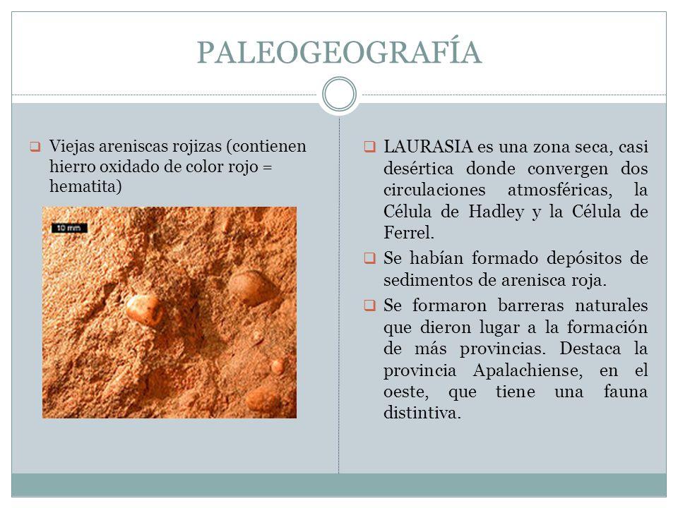 PALEOGEOGRAFÍA Se empezaron a formar las MONTAÑAS: Apalaches (EEUU) Caledónicas (Gran Bretaña y Escandinavia) En la costa oeste de Norteamérica, se formaron - DELTAS y - ESTUARIOS.
