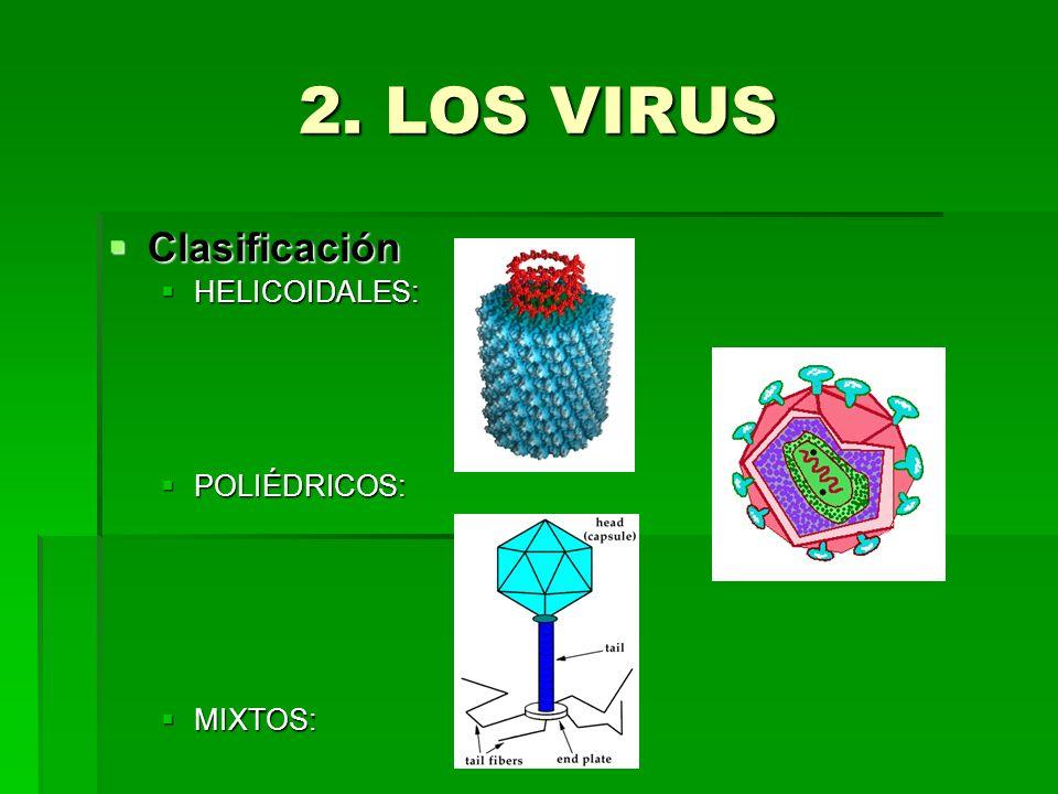 2. LOS VIRUS Clasificación Clasificación HELICOIDALES: HELICOIDALES: POLIÉDRICOS: POLIÉDRICOS: MIXTOS: MIXTOS: