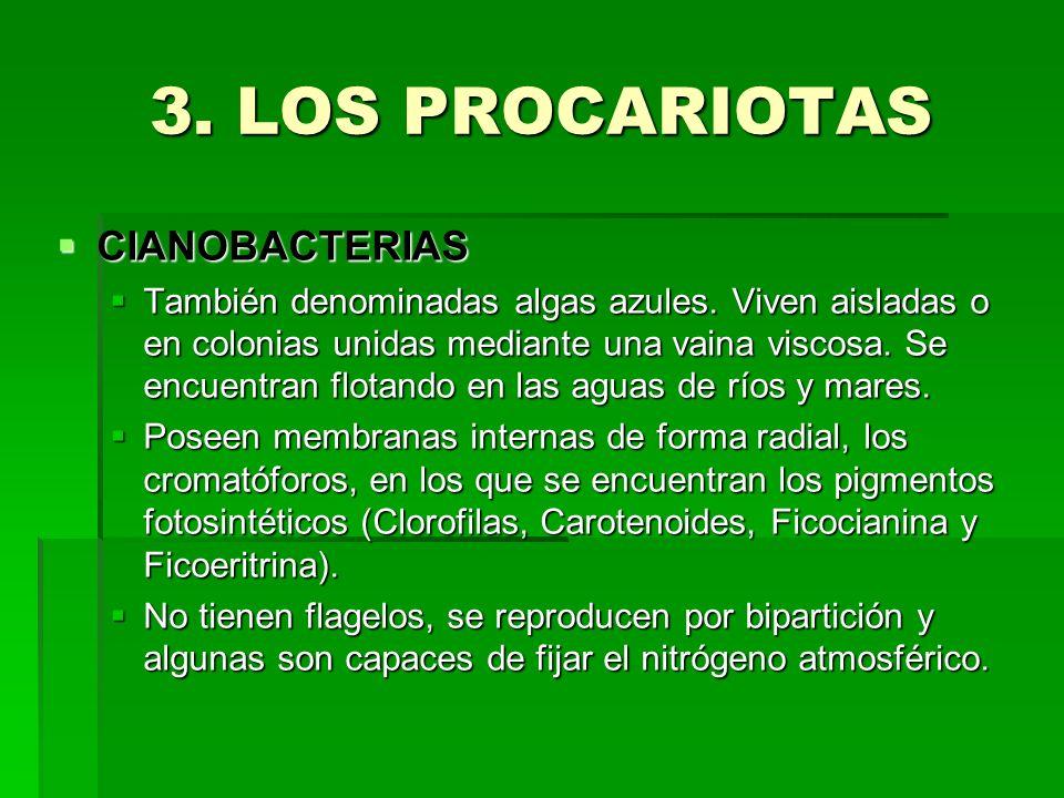 3. LOS PROCARIOTAS CIANOBACTERIAS CIANOBACTERIAS También denominadas algas azules. Viven aisladas o en colonias unidas mediante una vaina viscosa. Se