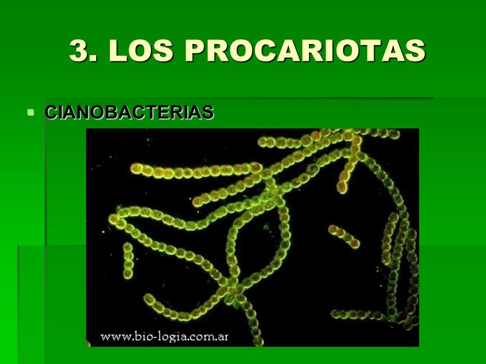 3. LOS PROCARIOTAS CIANOBACTERIAS CIANOBACTERIAS